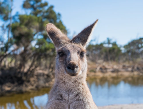7 Things To Know Before Traveling To Australia